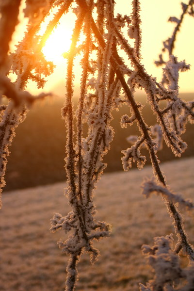 natur, winter, sonne, frost