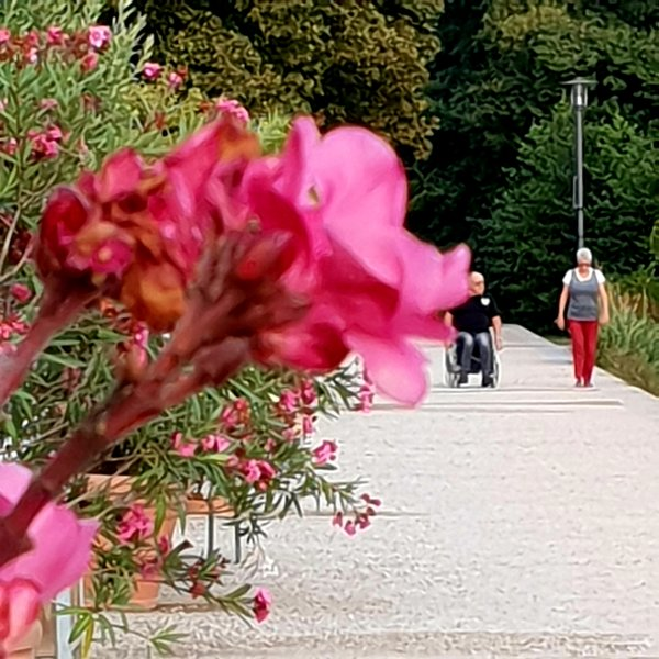 spaziergang, park