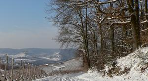 Winter in Weinsberg