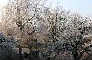 Wintermorgen in Bitzfeld