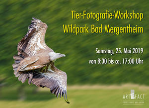 Tierfotografie-Workshop im Wildpark Bad Mergentheim