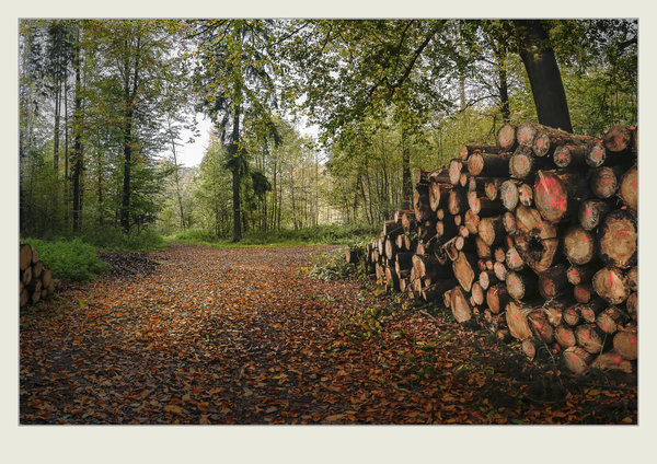 herbst, wald, spaziergang